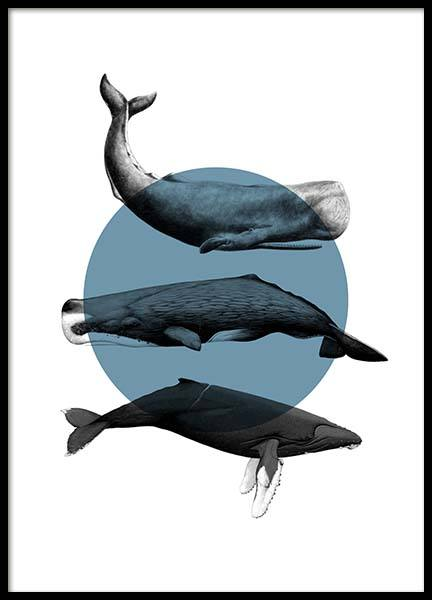 Whales Graphic Poster in der Gruppe Poster / Tiere bei Desenio AB (10033)