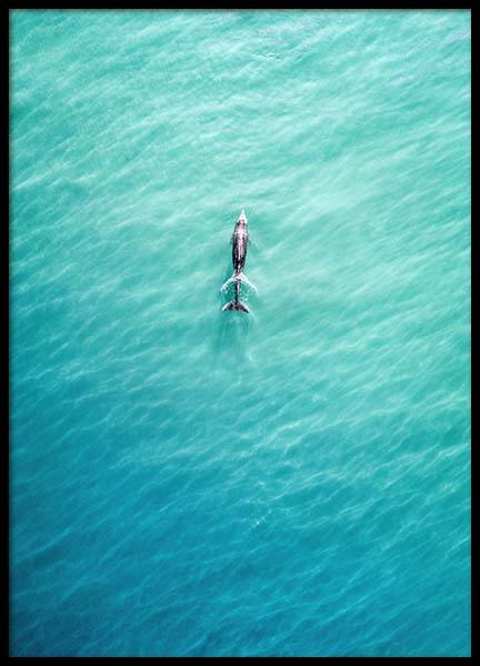 Dolphin From Above Poster in der Gruppe Poster / Naturmotive bei Desenio AB (10230)