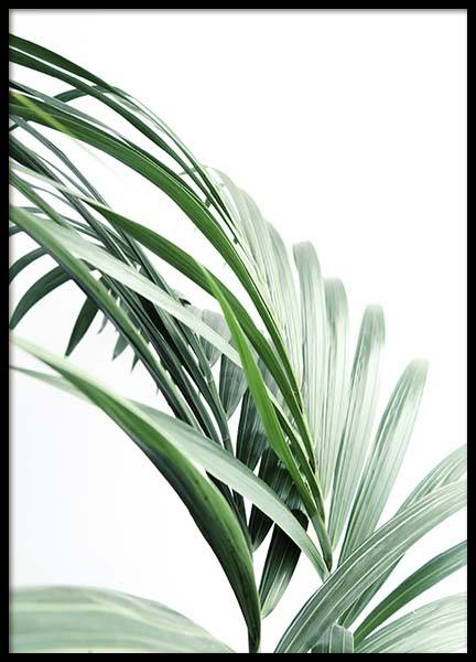 Palm Tree Leaves Close Up Poster