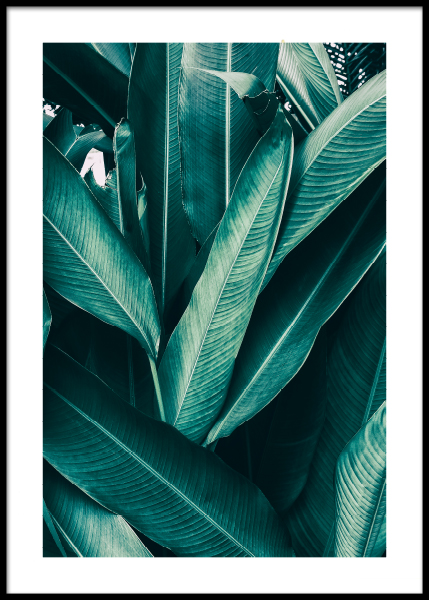 Tropical Leaves No1 Poster in der Gruppe Poster / Botanik bei Desenio AB (10439)