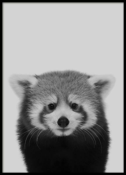 Red Panda Poster in der Gruppe Poster / Tiere bei Desenio AB (10496)