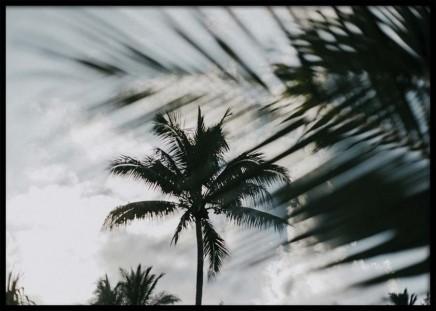 Palm Tree Shades Poster