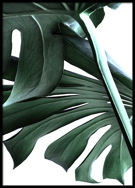 Big Monstera No.2 Poster in der Gruppe Poster / Botanik bei Desenio AB (10737)