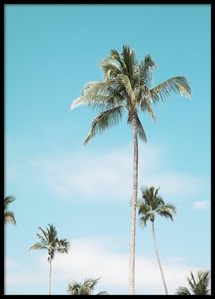 Miami Beach Palms Poster
