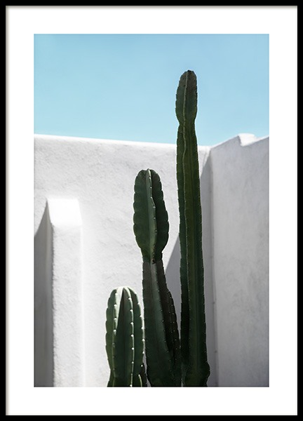 Cactus Wall Poster in der Gruppe Studio Collections / Studio Coast to Coast / Palm Springs bei Desenio AB (10792)