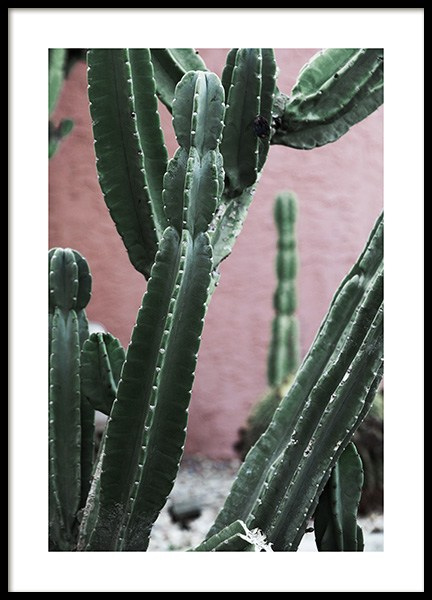 Pink and Green Cactus Poster in der Gruppe Poster / Fotografien bei Desenio AB (10950)