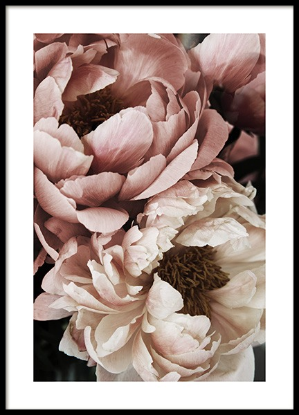 Coral Sunset Peony Poster in der Gruppe Poster / Fotografien bei Desenio AB (10988)
