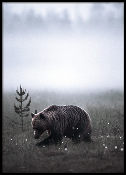 Meadow Bear Poster in der Gruppe Poster / Tiere bei Desenio AB (11422)