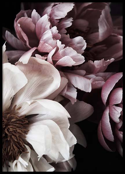 Dreamy Peony No1 Poster in der Gruppe Poster / Fotografien bei Desenio AB (11775)