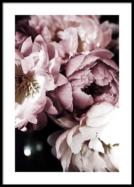 Dreamy Peony No3 Poster in der Gruppe Poster / Fotografien bei Desenio AB (11777)