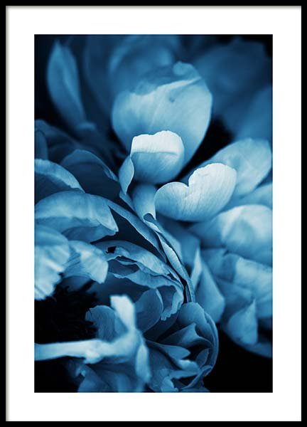 Blue Peony No3 Poster in der Gruppe Poster / Fotografien bei Desenio AB (11780)