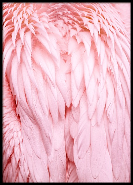 Pink Wings Poster in der Gruppe Poster / Tiere bei Desenio AB (12019)
