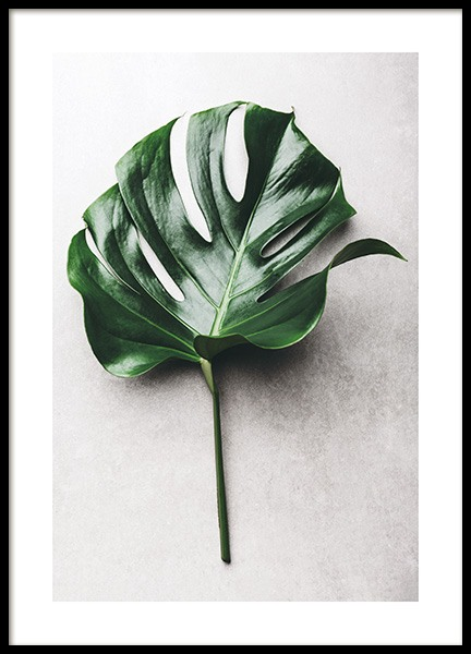 Green Monstera Leaf No1 Poster