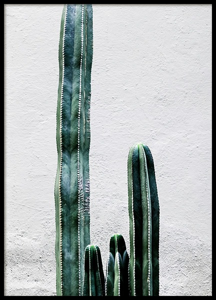 White Cactus Wall Poster in der Gruppe Poster / Fotografien bei Desenio AB (12222)