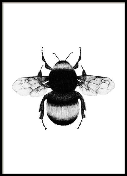 Bumblebee Drawing Poster in der Gruppe Poster / Illustration bei Desenio AB (12309)