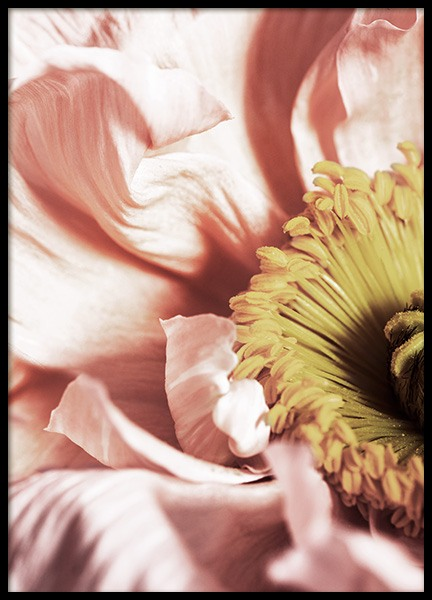 Close Up Poppy Flower Poster