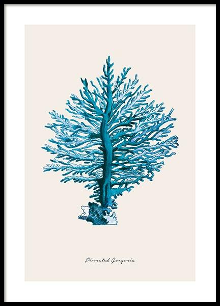 Blue Pinnated Gorgonia Poster