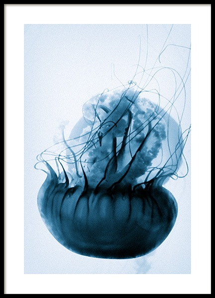 Floating Blue Jellyfish Poster