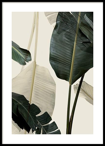 Banana Leaf Shades No1 Poster