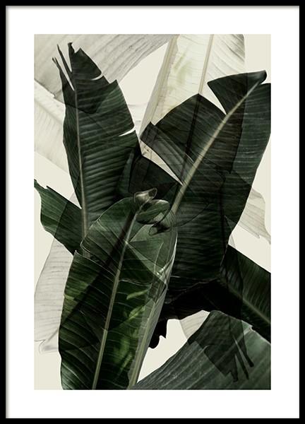 Banana Leaf Shades No2 Poster
