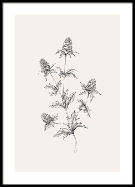 Thistle Sketch Poster in der Gruppe Poster / Illustration bei Desenio AB (12690)