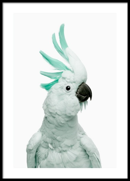 Mint Cockatoo Poster in der Gruppe Poster / Tiere /  bei Desenio AB (12842)