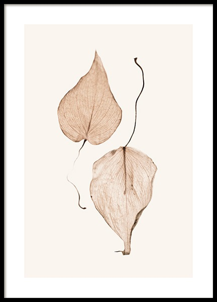Two Dried Leaves Poster in der Gruppe Poster / Fotografien bei Desenio AB (13203)