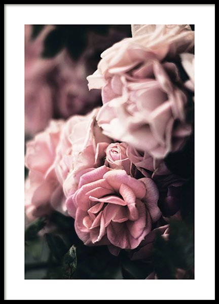 Delicate Rose Poster in der Gruppe Poster / Fotografien bei Desenio AB (13219)