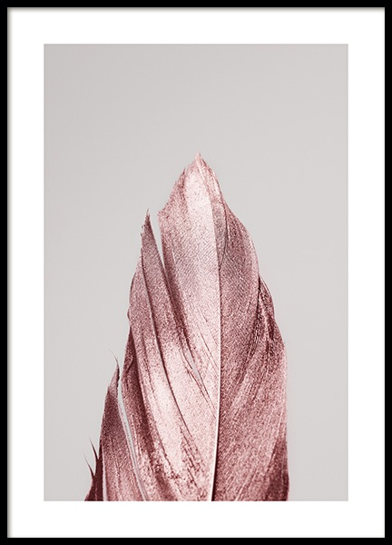 Pink Feather Poster