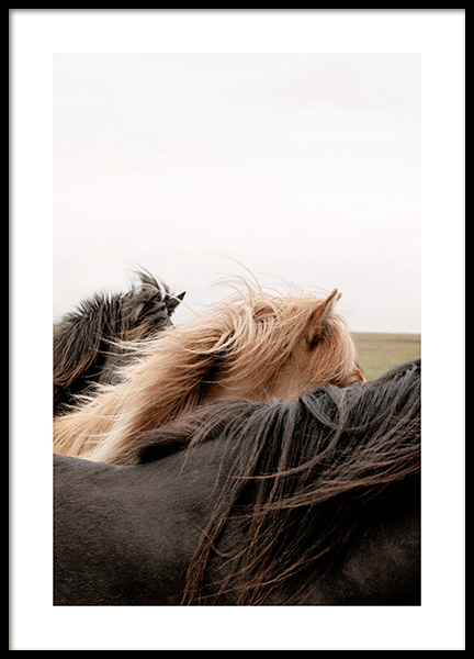 Horses of Iceland Poster
