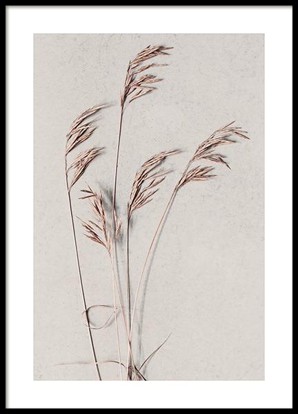 Desert Grass Poster