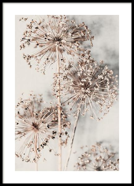 Autumn Allium Poster
