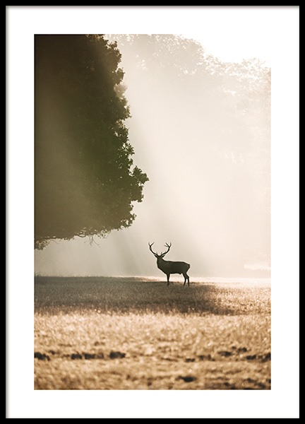 Red Deer in the Sunlight Poster in der Gruppe Poster / Tiere bei Desenio AB (13517)