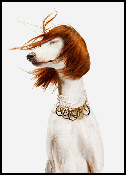 Dog in a Wig Poster