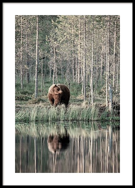 Bear by Lake Poster in der Gruppe Poster / Tiere bei Desenio AB (13591)