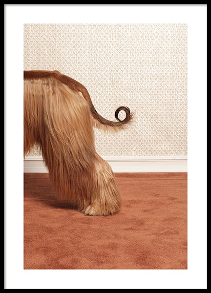 Afghan Hound Poster