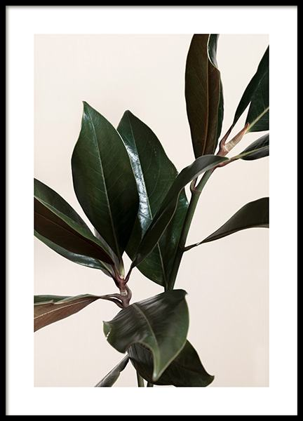 Magnolia Leaves No1 Poster
