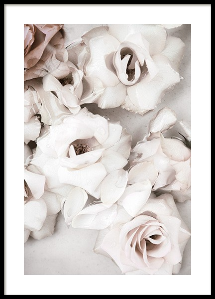 Close up White Roses Poster in der Gruppe  bei Desenio AB (13875)