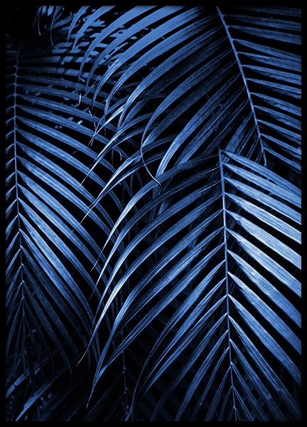 Blue Palm Leaves No2 Poster in der Gruppe Poster / Botanik / Palmen bei Desenio AB (14562)