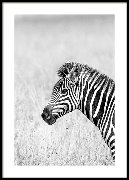 Zebra in the Grass Poster in der Gruppe Poster / Tiere / Wilde Tiere bei Desenio AB (14582)