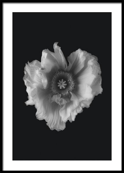 Poppy in Mono Poster