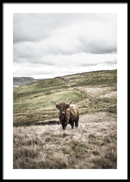 Cow In Landscape Poster