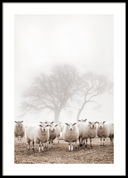 Sheep Herd Poster