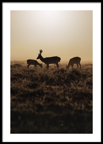 Deer in Bushy Park Poster