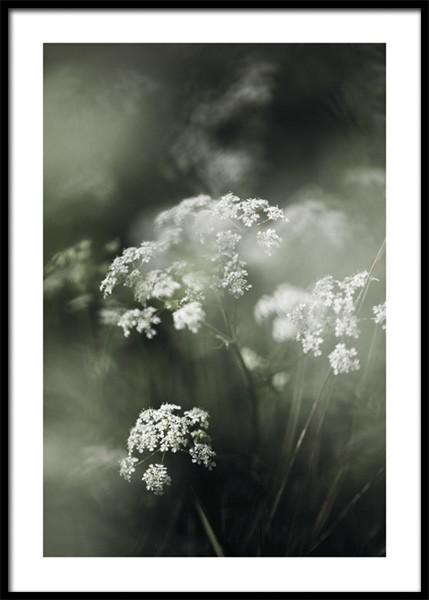 Misty Meadow Flower Poster