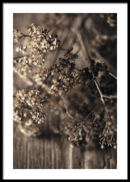 Dried Meadow Flower Poster