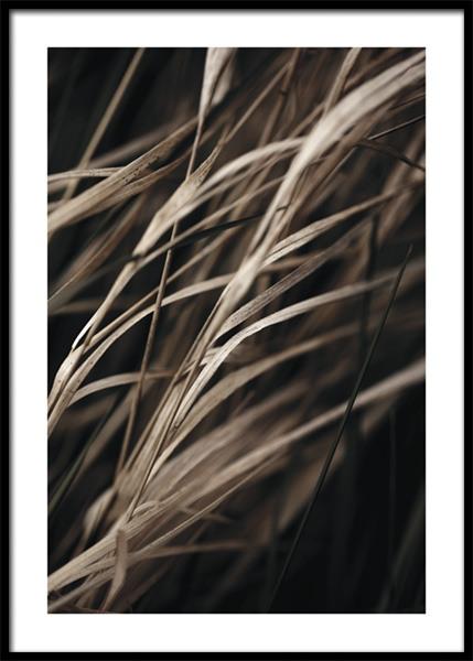 Brown Reeds Poster