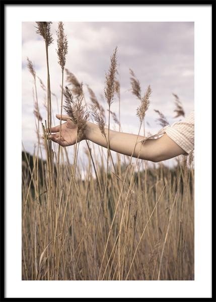 Soft Tickling Reeds Poster