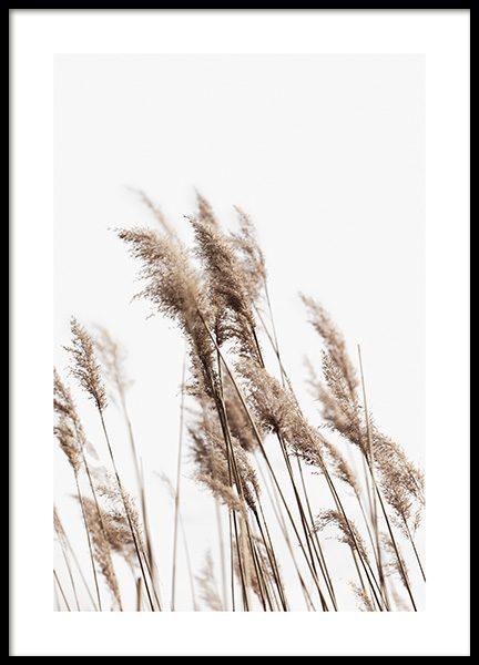Swaying Reeds No2 Poster