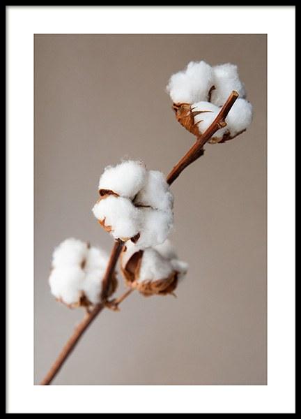 Cotton Flower Poster